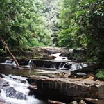 Stream in Sinharaja